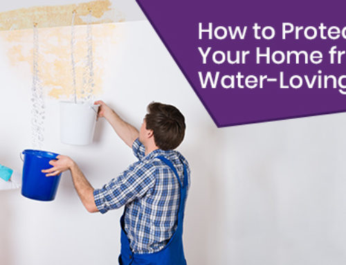 Pests and Plumbing: How to Protect Your Home from Water-Loving Pests