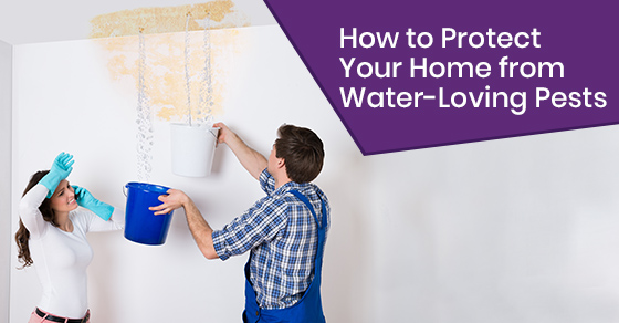 How to repair water leaks